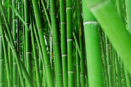 Horizontal natural bamboo wallpaper. Green background.
