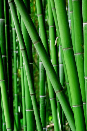 Vertical natural bamboo wallpaper. Green background.