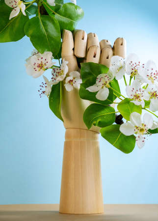 Wooden hand holds blooming apple tree branch on blue background. Springtime greeting card minimal still life. Stock fotó