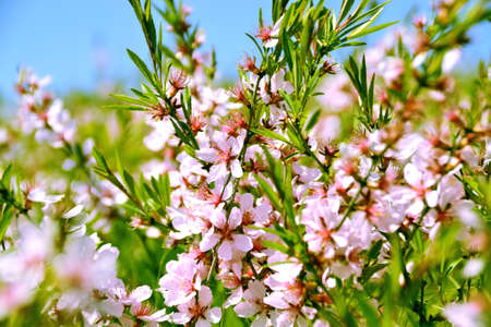 Spring meadow with beautiful flowers against the blue sky Stock Photo
