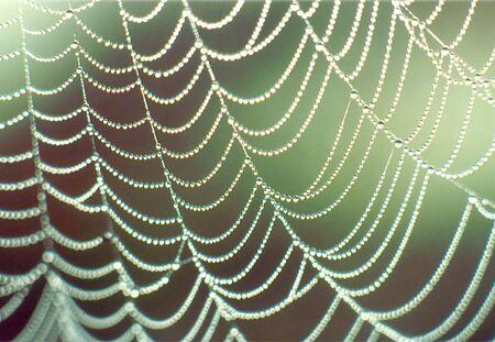 web drops Stock Photo
