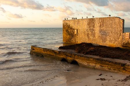 sea gulls sitting on sea wall with dramatic light Редакционное