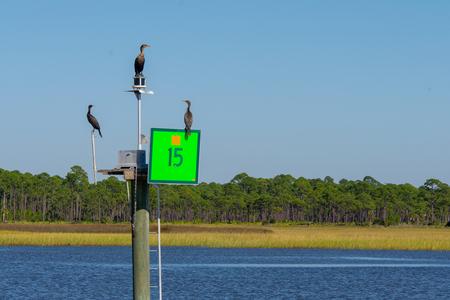 coromants sitting on green navigational marker 15 on the intercoastal waterway in north florida