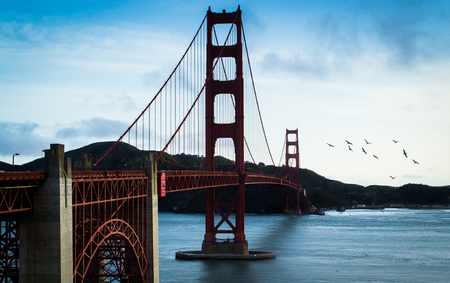 wide angle shot of sea gulls flying over the golden gate bridge in san francisco california