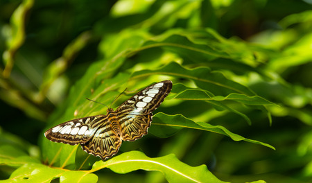 close up of brown and white striped butterfly on green leaf with blurred background