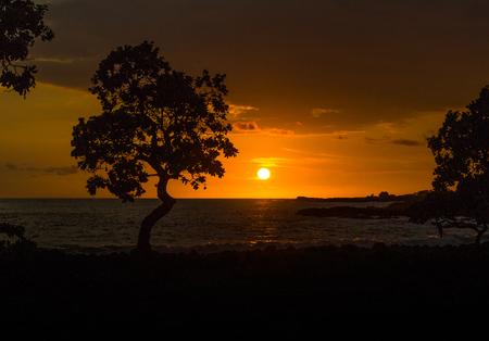sunset silhouette of a tree on kapana beach in hawaii on the big island Фото со стока