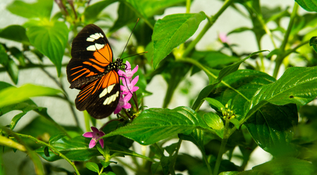 close up of black, white and orange butterfly on purple flowers surrounded by green leaves