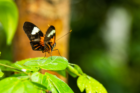 close up of orange and black butterfly on green leaf with blurred background Фото со стока