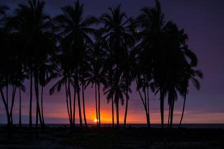 dark sunset with palm trees on the big island hawaii