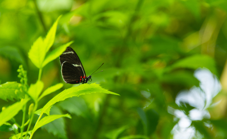 black and orange butterfly on blurred background