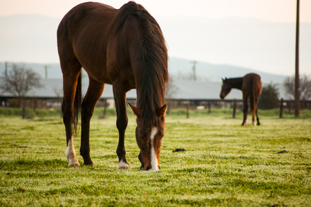 misty morning on horse pasture