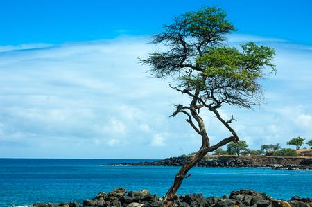 coastline tree in small bay