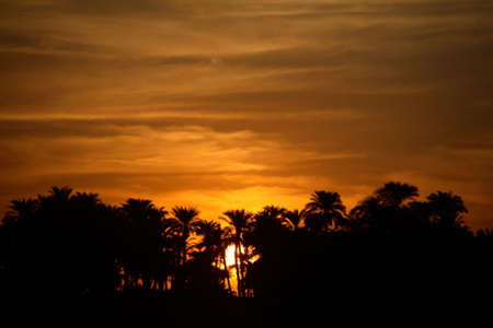 eventide: A late evening in Egypt, with the Sun setting behind the trees.