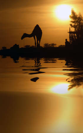 A camel in Egypt with the water reflection. Stok Fotoğraf