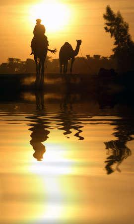 Un cammello in Egitto con l'acqua di riflessione.