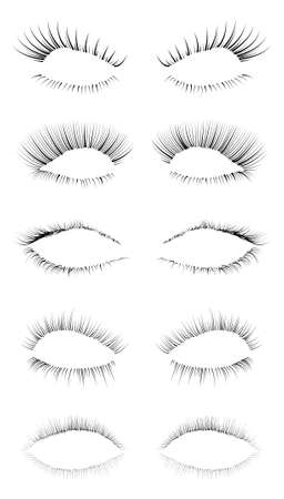 eyelash: Five different eyelashes in an editable  file, great for illustration compositions. Illustration