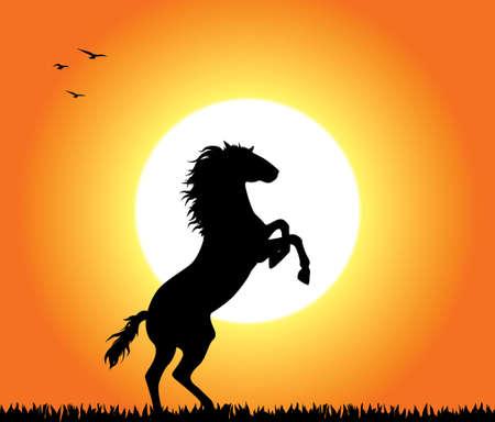 rearing: A horse rearing at sunset. Editable vector illustration.