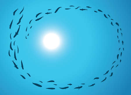 school of fish: A school or shoal of fish, from below, with the sun above