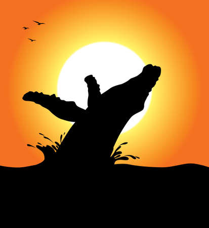 humpback: A humpback whale silhouette jumping at sunset Illustration