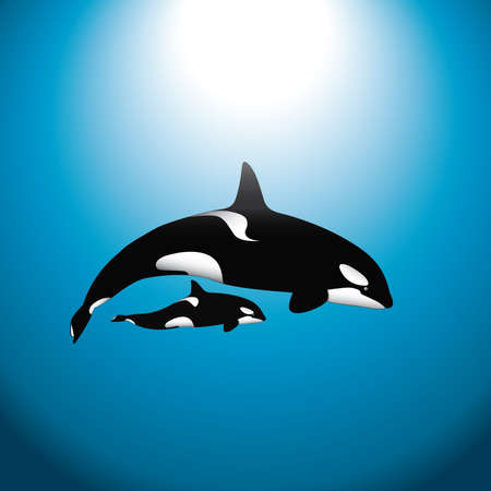 killer: An orca (or killer) whale with a baby