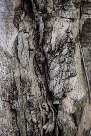 A close-up image of a tree bark texture backgroud. Check out other textures in my portfolio. Stock Photo - 17472886