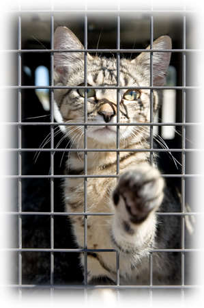 An orphaned kitten in a cage reaching out with a paw