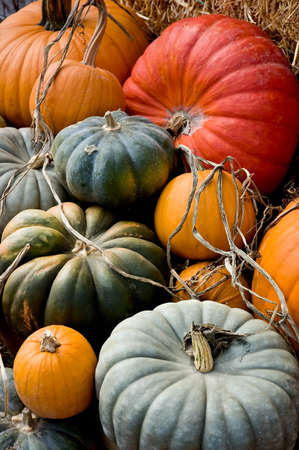 Arrangement of a variety of squash and pumpkins on straw, leaves and other bits of nature. Imagens