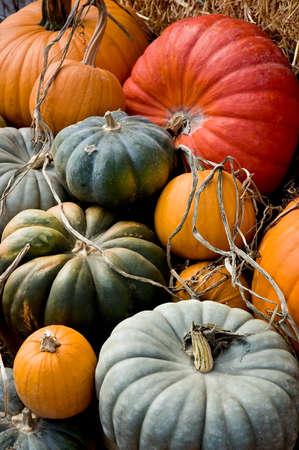 dynia: Układ różnych squash i dynie na słomę, liście i inne bity natury.