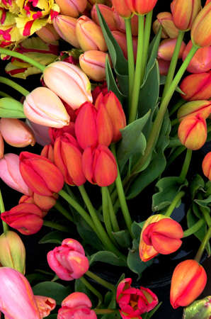 Dreamlike image of colorful tulips with an Art Deco flavor