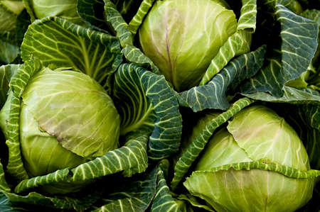 Fresh picked cabbages at a farmers market stall