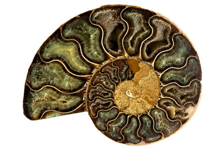 Image of an ancient fossilized nautilus shell isolated on a white background