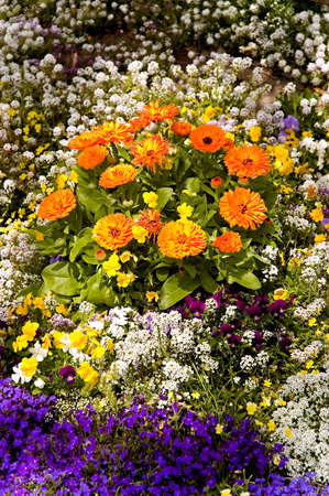 A multitude of flowers in a Springtime garden Zdjęcie Seryjne