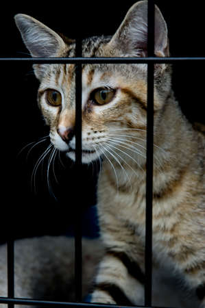 A kitten in a cage, wanting to get out photo