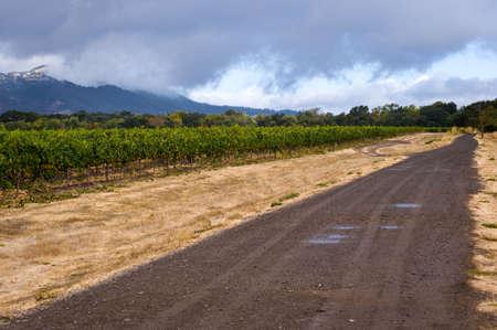 wine road: Rainy morning at a California vineyard in early Autumn Stock Photo
