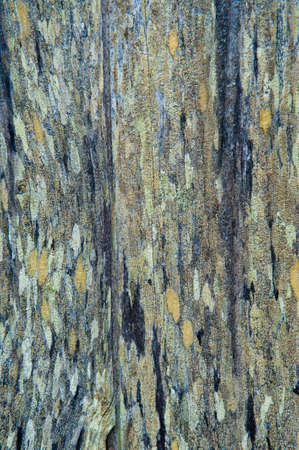 Fence boards with multi-colored lichen patches Imagens
