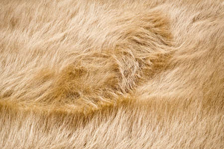 windswept: A whorl in a field of windswept dry grass