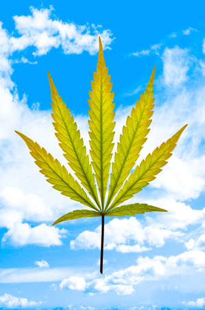 A golden marijuana leaf on a cloudy blue sky background photo