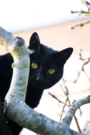 A black cat with yellow-green eyes photo