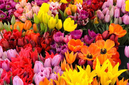 Colorful tulips at a farmers market flower stand.