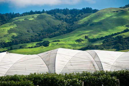 White tents of a raspberry farm in California Stock Photo - 6852748