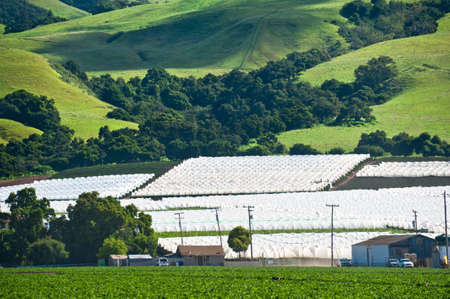 Agricultural development pushing up onto a California mountainside Stock Photo - 6852742