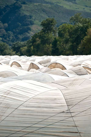 White hoop tents over Pajaro Valley California raspberry fields. Stock Photo - 6852745