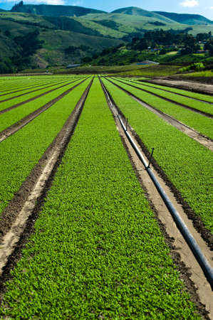 Rows of freshly planted spinach in the Parajo Valley of California Stock Photo