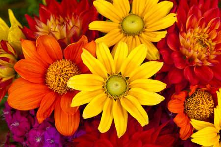 A bouquet of Autumn flowers