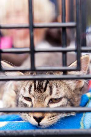A tabby striped cat resting in a cage photo