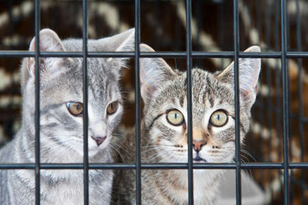 Two orphan tabby kittens waiting in a cage Stock Photo