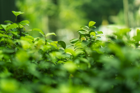 blurring: Plant background with blurring Stock Photo