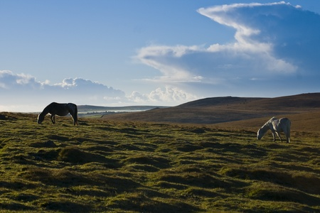 bodmin: Taken high up on Bodmin Moor Cornwall UK where wild ponies live. This image was taken just after sunrise, there is still a mist down in the valley Stock Photo
