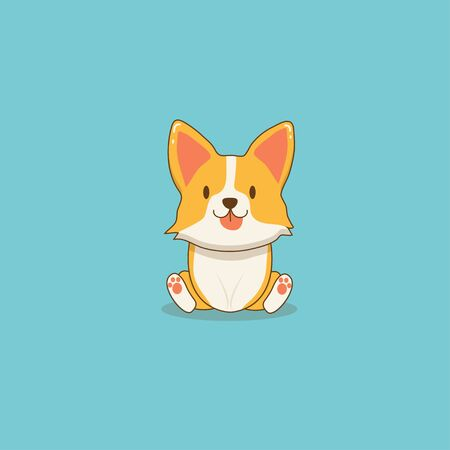 Cute corgi puppy dog