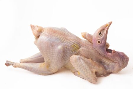 Raw fresh hen chicken isolated on white background, Ayam Kampong or Kampung is the chicken breed reported from Indonesia . The name means simply